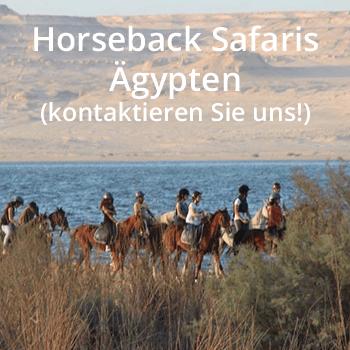 CB_Links__0003_Horseback-Safaris--Ägypten-(kontaktieren-Sie-uns!)